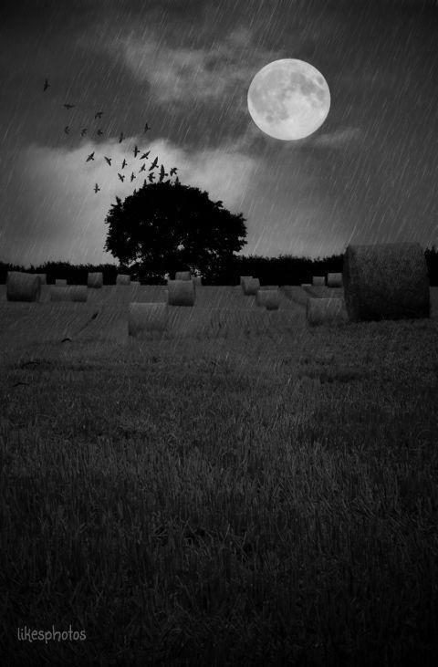 music,nature,moon,tree,blackandwhite