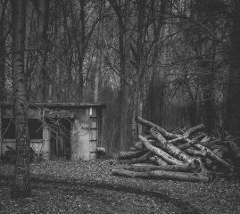 photography blackandwhite nature woods trees
