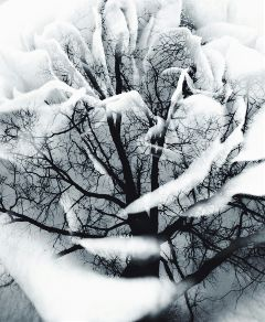 wapdoubleexposure blackandwhite nature flower trees