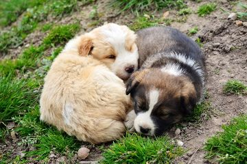 relax puppies cute