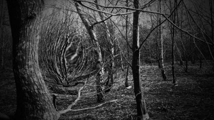 blackandwhite freetoedit nature photography
