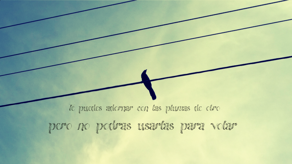 Bird Pajaros Frases Quotes Volar Fly Image By Lau Gil