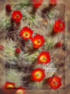 flowerart cactus desertbeauty motion hike