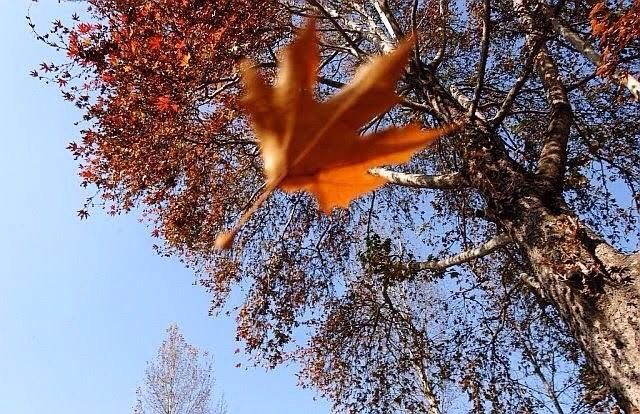 favorite season essay autumn Autumn is my favorite season of the year what is your favorite season and why mine is autumn autumn or fall as we call it was always my favorite time, too.