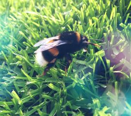 bee spring nature