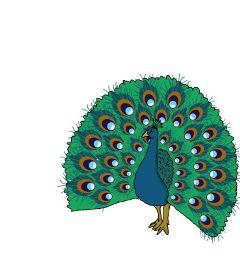dcpeacock