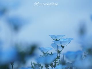 flower spring nature cute blue