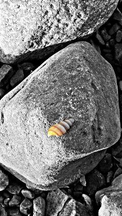 spring photography nature blackandwhite beach