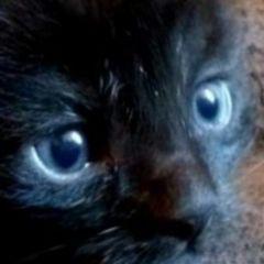 photography kitten cuteeyes