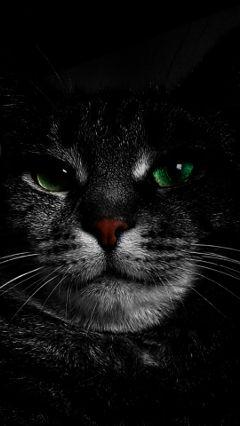 blackandwhite colorsplash emotions petsandanimals cat