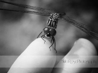 shadows blackandwhite nature photography dragonfly