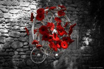 spring flowers colorsplash girona