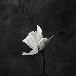 except blackandwhite flower nmlf spring