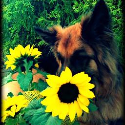 limegreen photography nature garden yellow
