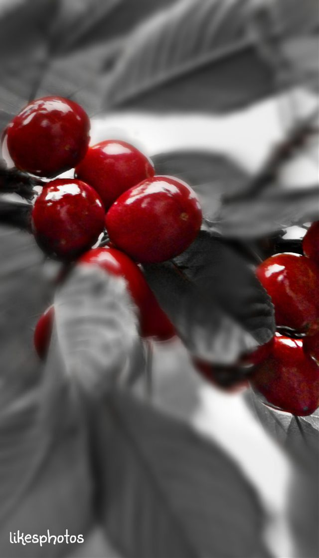 pictures of cherries