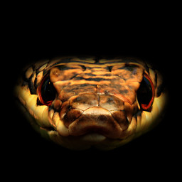 cute freetoedit petsandanimals photography snake