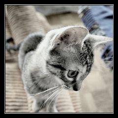 cute emotions love petsandanimals cat