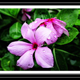 colorful emotions flower freetoedit hdr