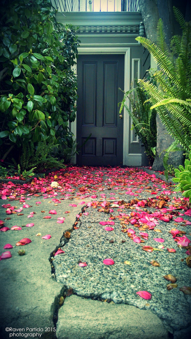 Broderick street #flower #nature #photography #sanfrancisco #summer #rpphotography #bayarea