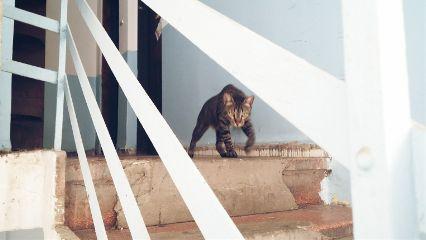 petsandanimals cat tiger israel tlv