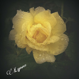 photography flower rain