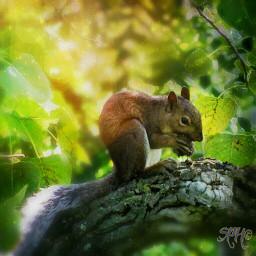 nature colorful squirrels