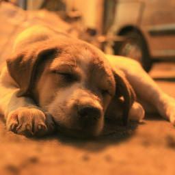 quotesandsayings emotions streetphotography puppy petsandanimals