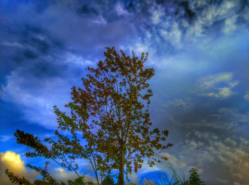 09/08/2015... Picture taken & edited by Shawn Lee Honaker...