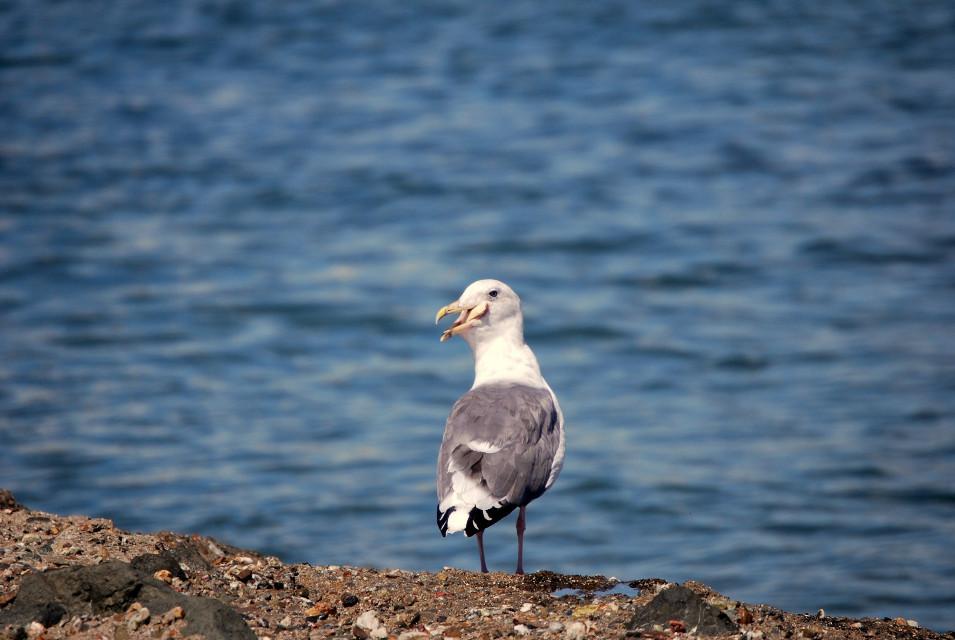 #photography #freetoedit #bird #petsandanimals A mouth full 😁