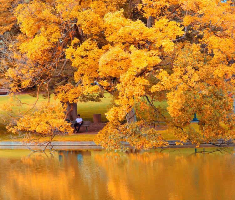 This morning in Davis, CA. #yellow #nature #hue #ruleofthirds #freetoedit #wapautumn