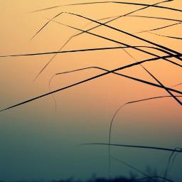 nature sunset grass sil