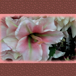 flower colorful emotions photography frame