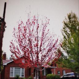 fall colors trees nevada reno
