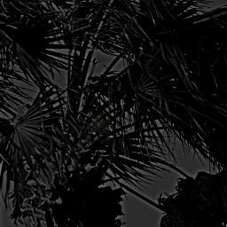 blackonblack hdr blackandwhite pencilart photography